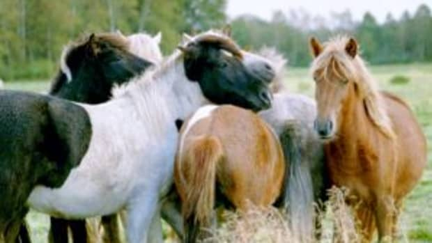 horses-their-ability-to-feel-and-their-sense-of-touch