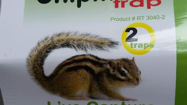 new-humane-chipmunk-trap