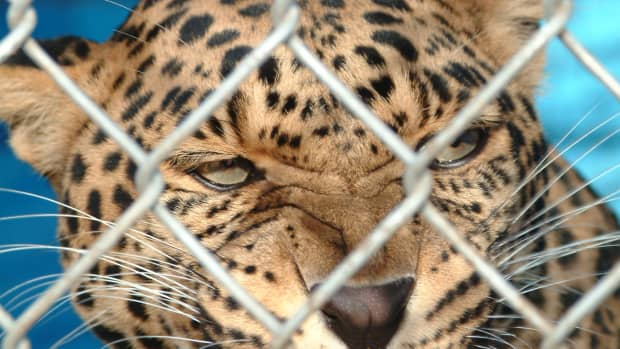 zoos-who-decided-to-keep-exotic-animals-in-a-zoo