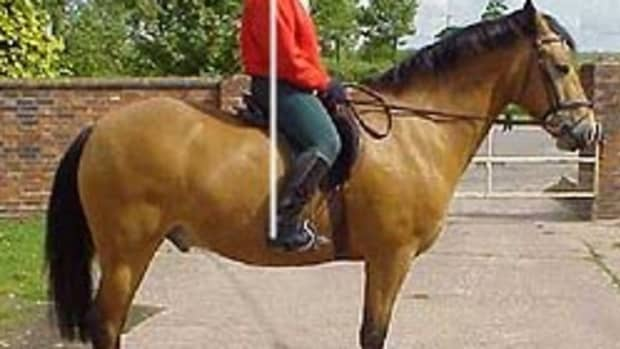 horse-riding-lessons-position-of-the-lower-leg