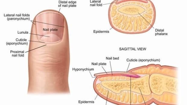7-best-nail-care-facts
