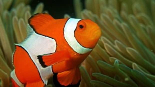 no-sick-fish