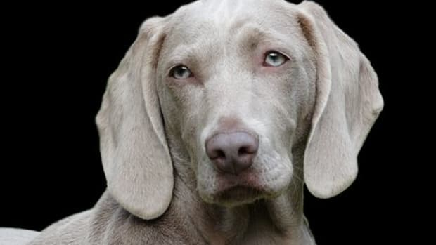 20-cherokee-indian-names-for-your-dog