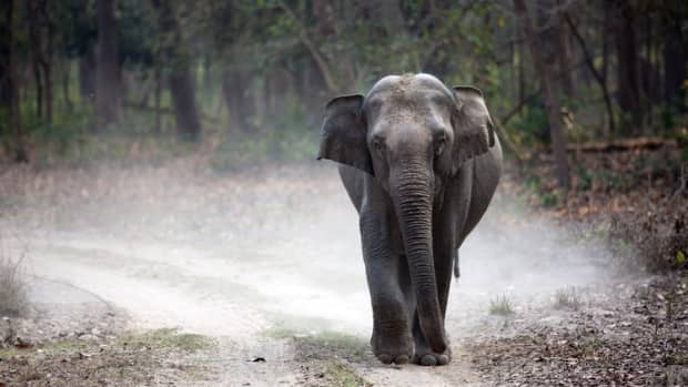 how-to-plan-a-trip-to-jim-corbett-national-park