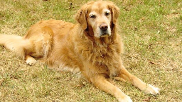 amazing-dog-behavior-human-disease-detection