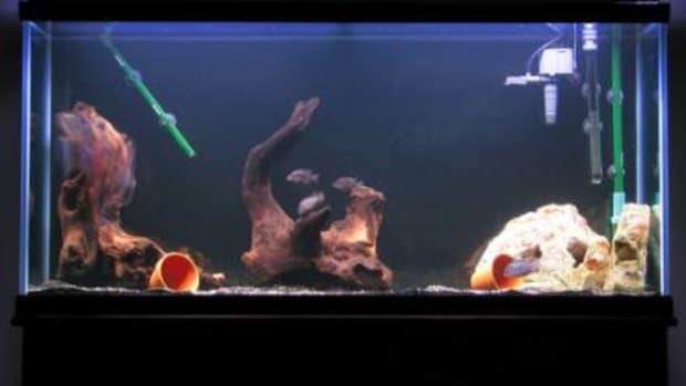 choosing-the-quietest-aquarium-filter-for-a-fish-tank