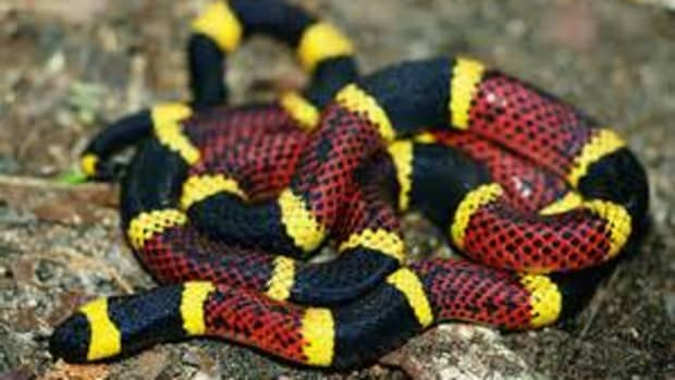 most-venomous-snakes-in-the-united-states