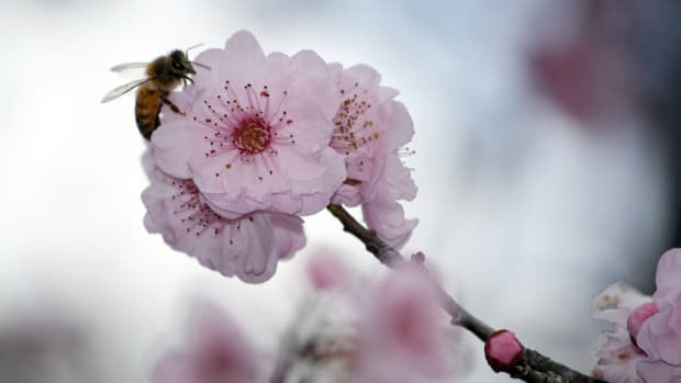 little-known-facts-about-honey-bees-plus-poems