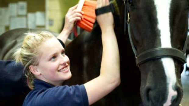 5-horse-care-tips
