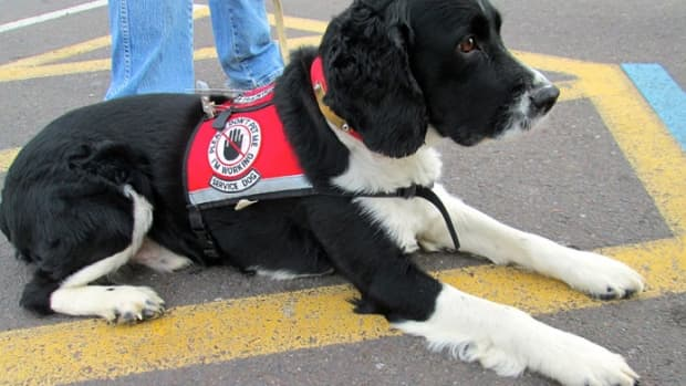 service-dogs-on-duty