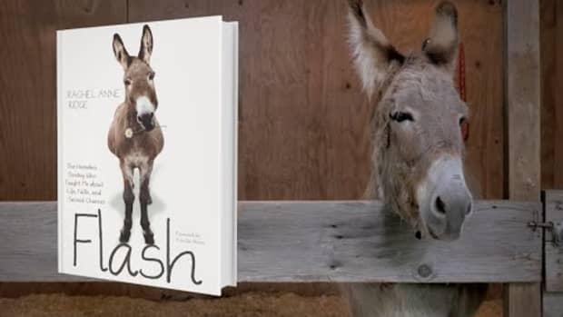 a-book-review-flash-the-homeless-donkey