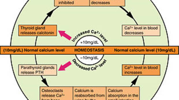 new-osteoporosis-medications