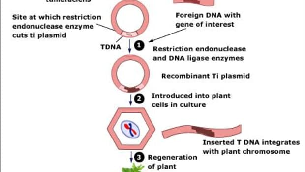 whatisgeneticallymodifiedfood