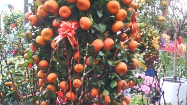 lucky-plants-for-chinese-new-year