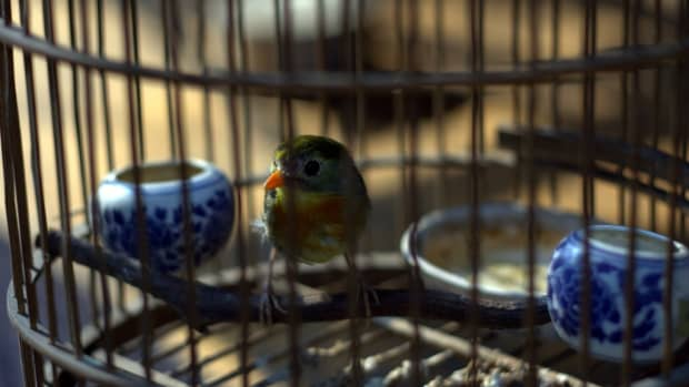 how-to-purchase-bird-supplies-for-your-pet-bird