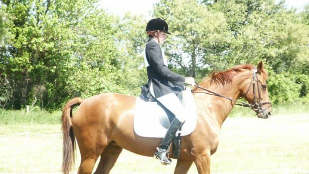difficult-horses-have-the-most-lessons-to-teach