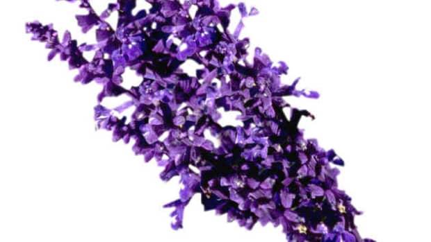 top-10-best-lavender-based-perfumes-or-fragrances-for-men-masculine-scents