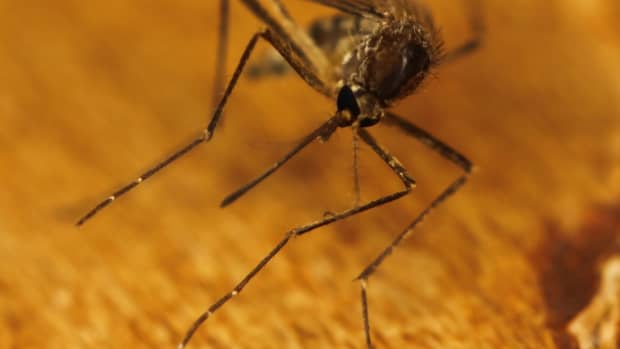 best-mosquito-repellent-and-anti-mosquitoes-tricks
