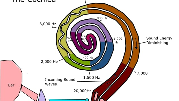 what-is-the-cochlea