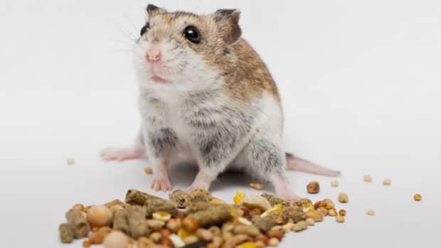 organic-hamster-food-recipe