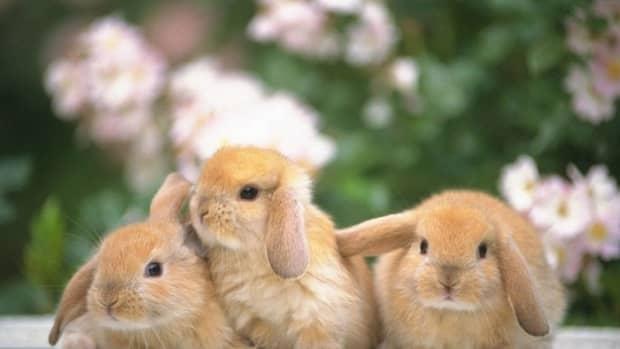 why-rabbits-make-great-pets