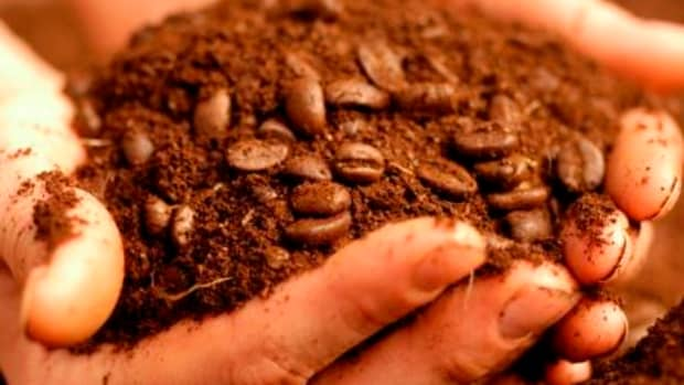 what-can-be-done-with-old-coffee-grounds