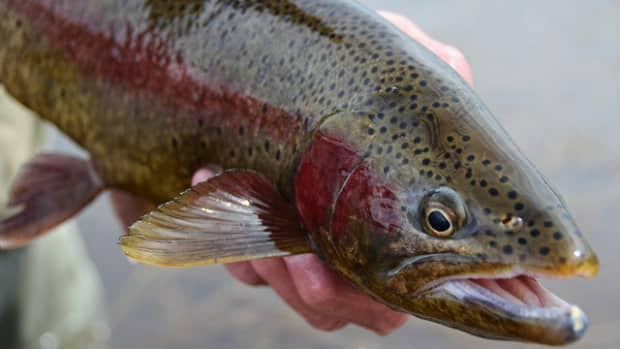 how-to-catch-trout-in-lakes