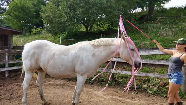 a-colorful-new-twist-on-desensitizing-your-horse