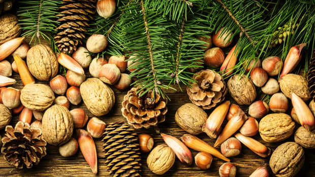 popular-christmas-nuts