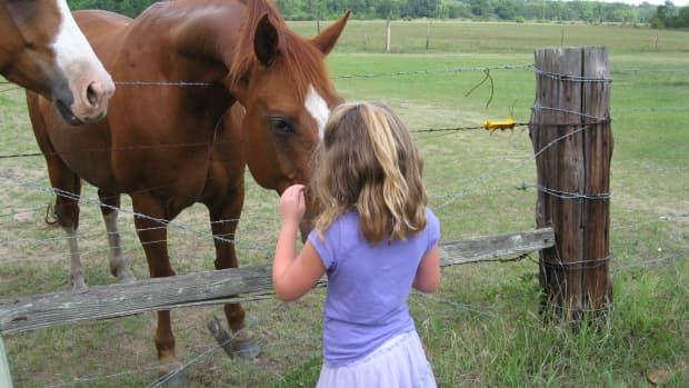 animal-abuse-soring