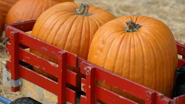 how-to-roast-pumpkin-seeds-2