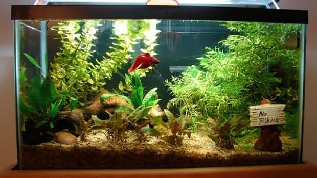 betta-fish-tanks