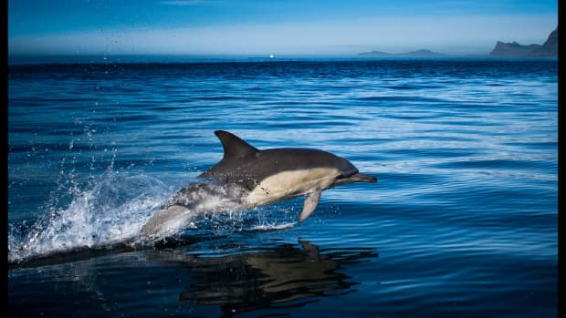 dolphins-and-whales-are-not-too-smart-for-captivity