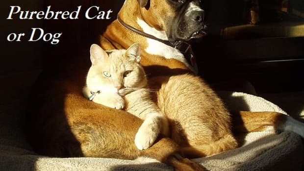 why-you-should-never-buy-a-dog-or-cat