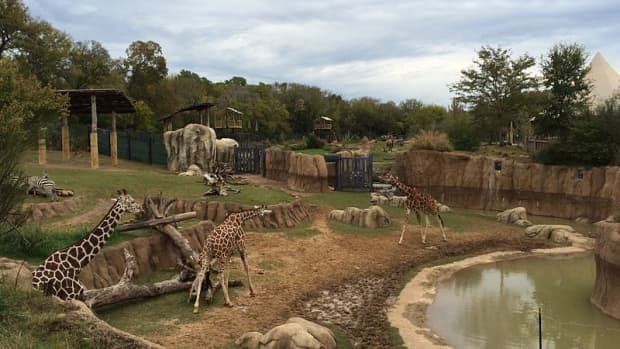 dallas-zoo-is-largest-zoo-in-texas