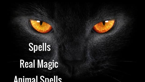 spells-real-magic-animal-spells