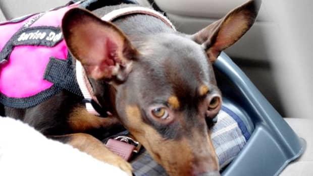 epilepsy-and-the-service-dog