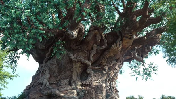 Tree of Life in Animal Kingdom Disney World (Courtesy of awesomeflorida.com)