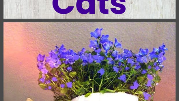 protect-you-garden-from-the-worst-of-all-pestscats