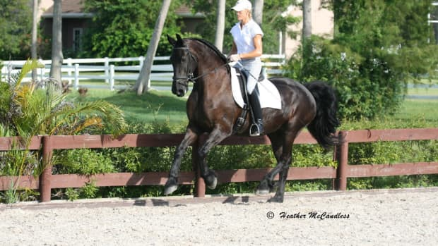 different-types-of-horse-disciplines