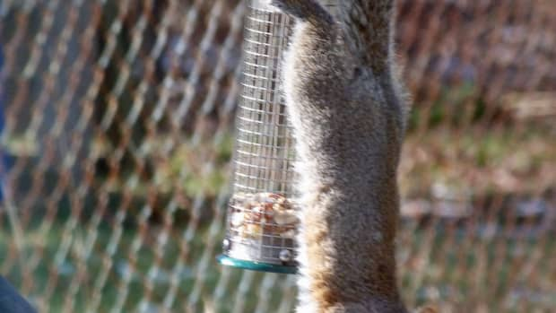 funny-squirrel-feeders-for-your-yard