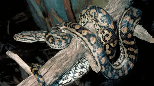 how-a-dead-snake-killed-an-entire-family-real-story