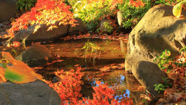 best-fall-colors-u-pick-farms-attractions-and-living-in-rockford-illinois-and-the-rock-river-valley