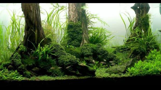 planted-aquarium-substrate