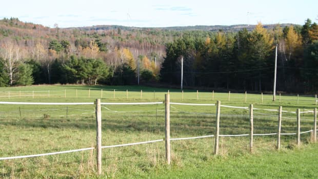 how-to-make-a-horse-paddock-quickly