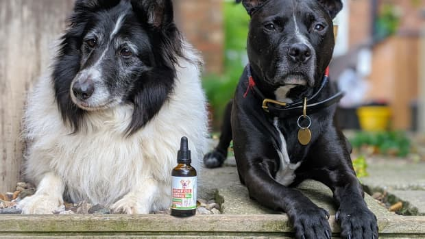 does-your-dog-struggle-with-thunder-fireworks-and-other-loud-noises-hemp-oil-might-be-the-answer