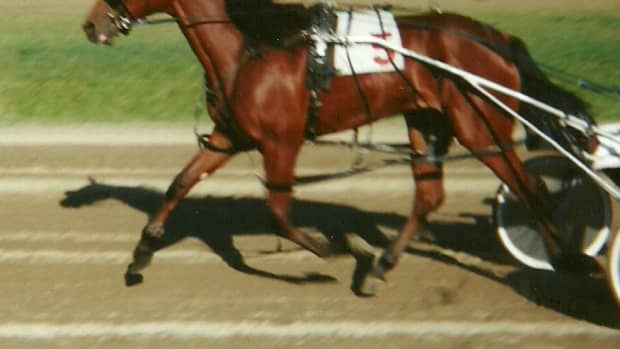 equipment-of-the-standardbred-harness-racing-horse