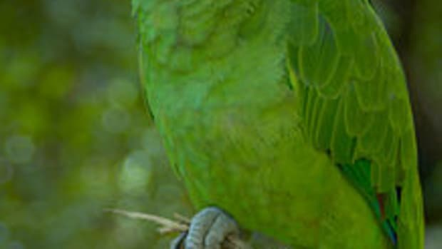 great-names-for-your-yellow-naped-amazon