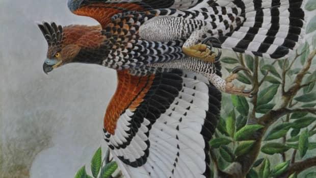 8-largest-eagles