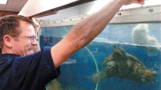 feeding-turtles-live-food
